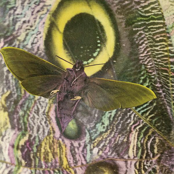 Mothmen-2400-resize