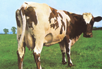 Vinyl subscription service Feedbands launches farm to literally feed bands